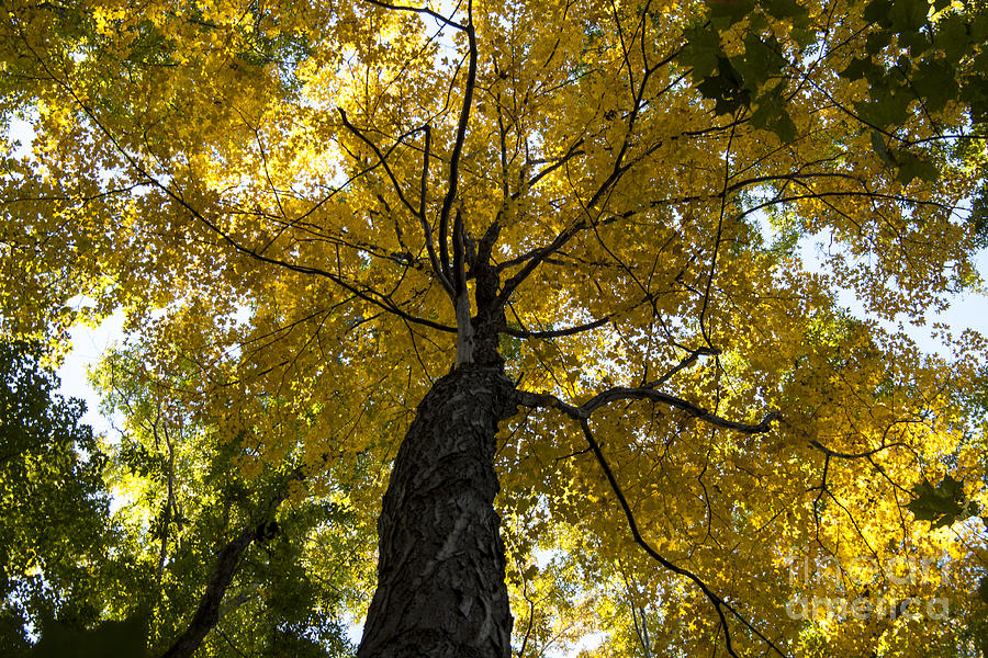Tree Photograph - Autumn Colors by Darleen Stry