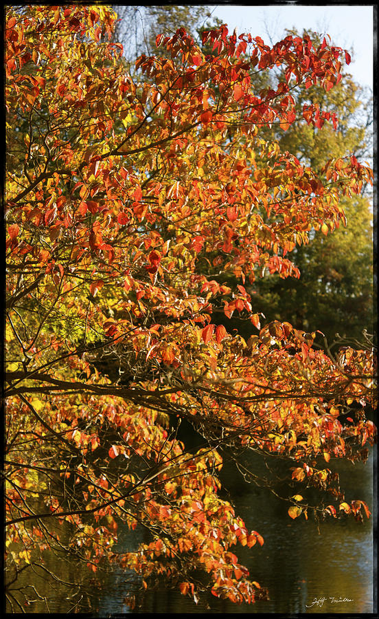 Trees Photograph - Autumn Colors In Pa by Heinz G Mielke