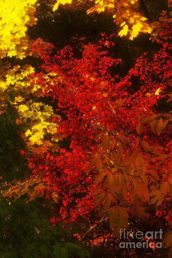 Autumn Photograph - Autumn Colors by Jeff Breiman