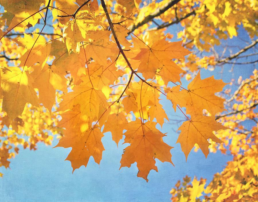 Autumn Photograph - Autumn Colors by Kim Hojnacki