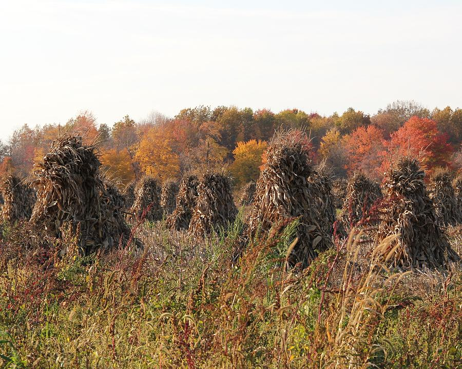 Fall Photograph - Autumn Corn by Donna Bosela