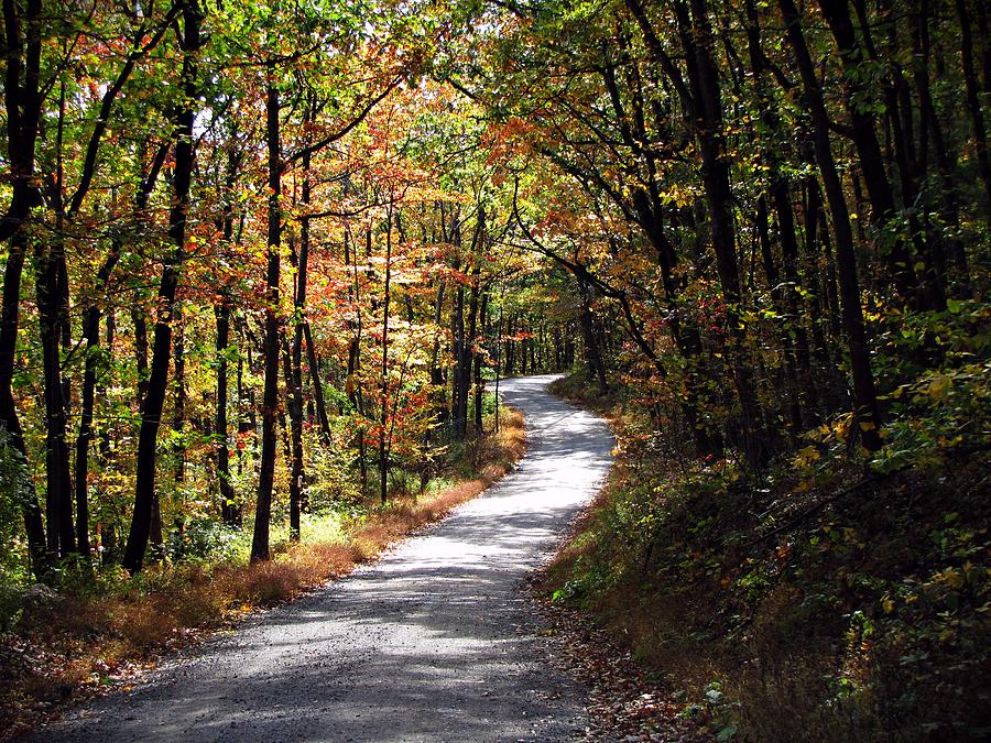 Autumn Country Lane Photograph By David Dehner