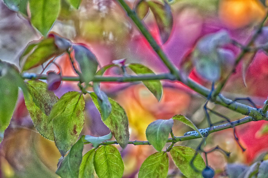 Autumn Photograph - Autumn Crayolas by Ross Powell