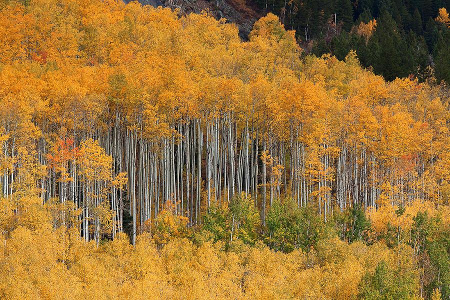 Leaves Photograph - Autumn Curtain by Jim Garrison