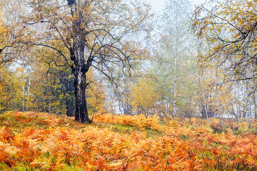 Balkan Mountains Photograph - Autumn Dreams by Evgeni Dinev
