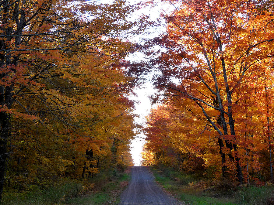 Woods Photograph - Autumn Fire by Terry Eve Tanner