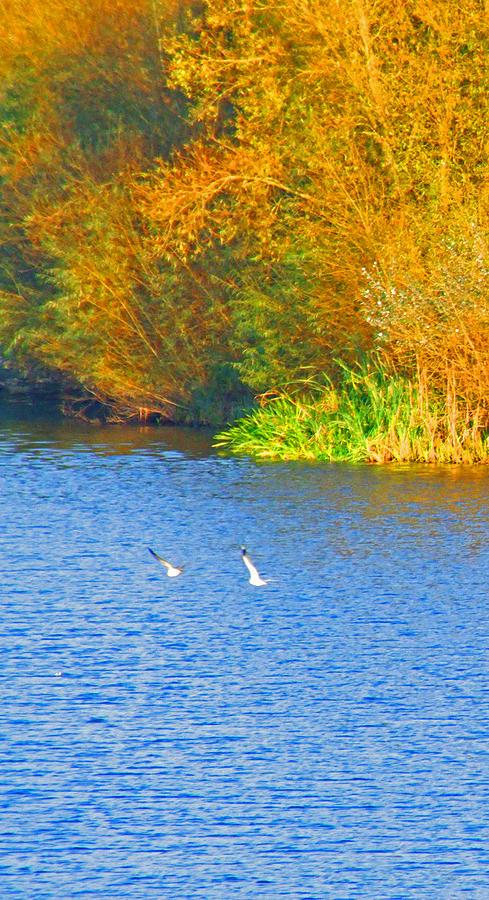 Autumn Season Photograph - Autumn Flight by Bai Qing Lyon