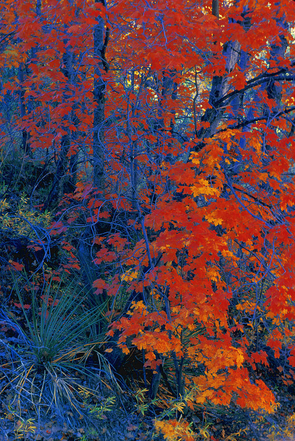 Country Photograph - Autumn Foliage by Don Hammond