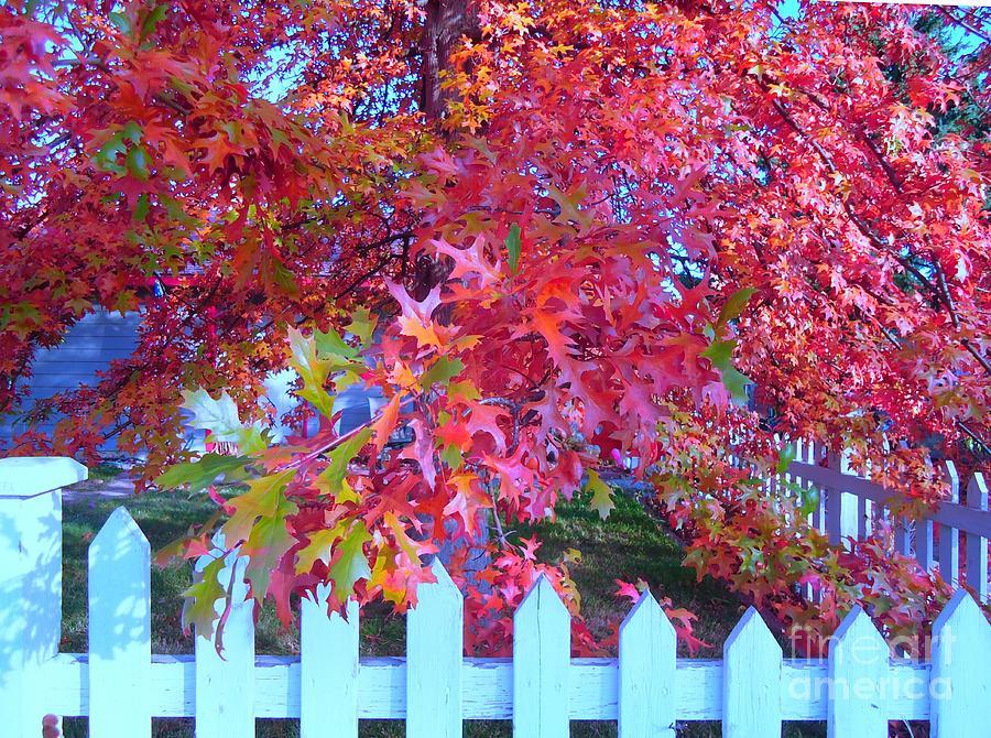 Oak Photograph - Autumn Glory by Ann Johndro-Collins