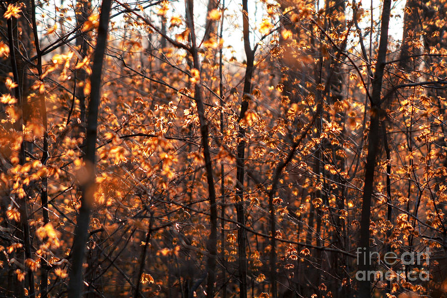 Maple Leaves Photograph - Autumn Glory by Chris Hill