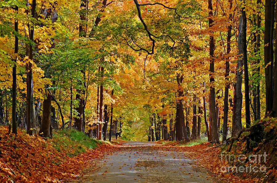 Autumn Gold Photograph By Rodney Campbell