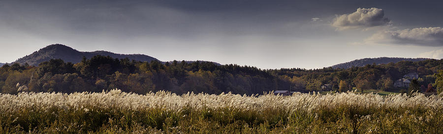 Autumn Photograph - Autumn Grasses - North Carolina Autumn Scene by Rob Travis
