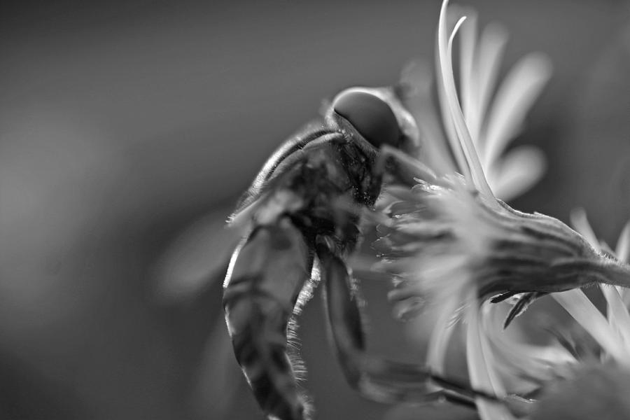Bee Photograph - Autumn Harvest by David Rucker