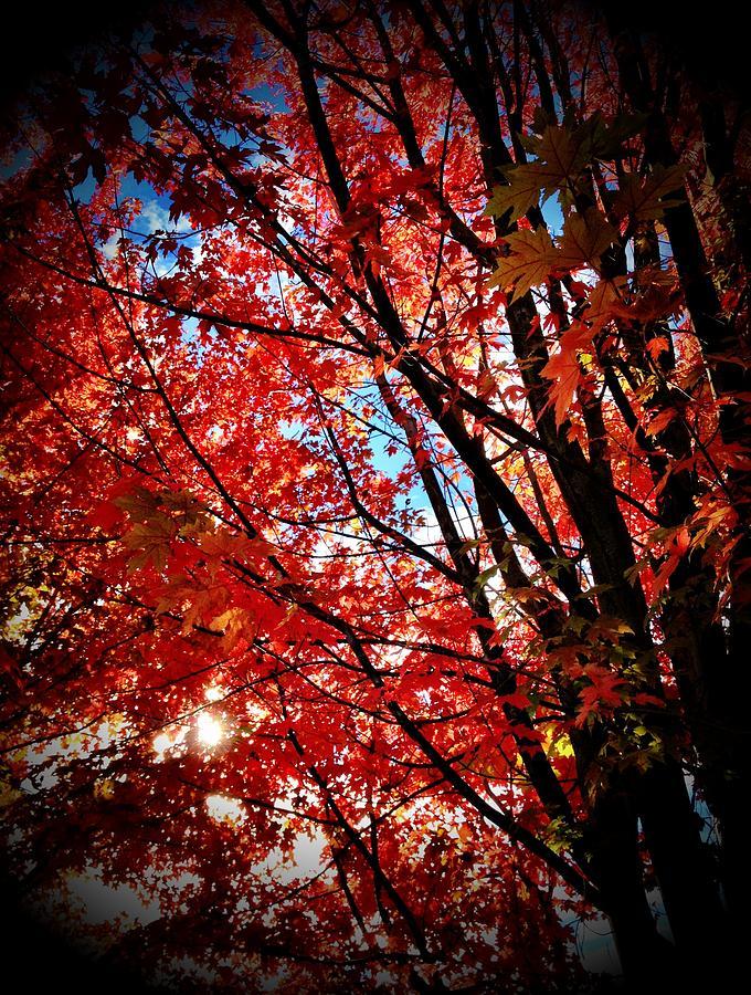 Autumn Photograph - Autumn Hymn by Anna Bree