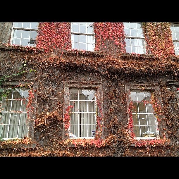 Autumn Photograph - #autumn In #dublin by David Lynch