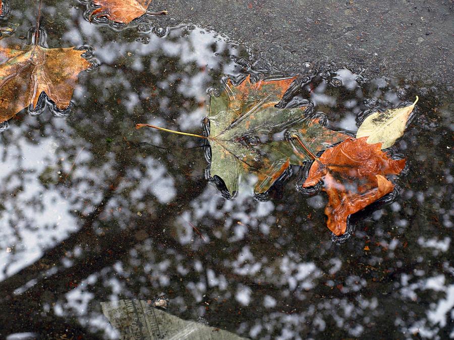 New York Photograph - Autumn In New York City by Chris Ann Wiggins