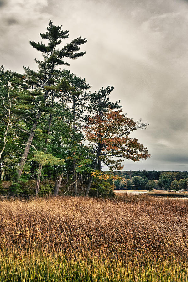 Tree Photograph - Autumn in NH by Edward Myers
