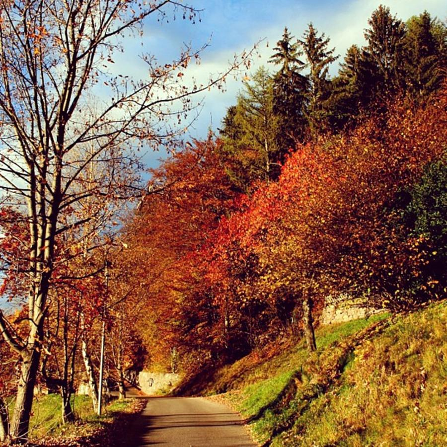 Autumn Photograph - Autumn In South Tyrol by Luisa Azzolini