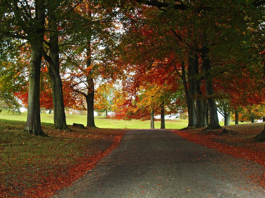 Park Photograph - Autumn In Studley Deer Park by Steve Watson