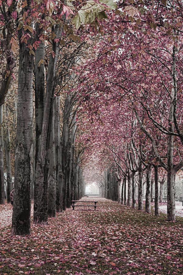 Photo Photograph - Autumn In The Grove by Angel Jesus De la Fuente