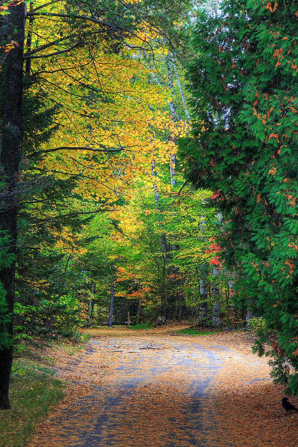 Autumn Photograph - Autumn by Kean Poh Chua