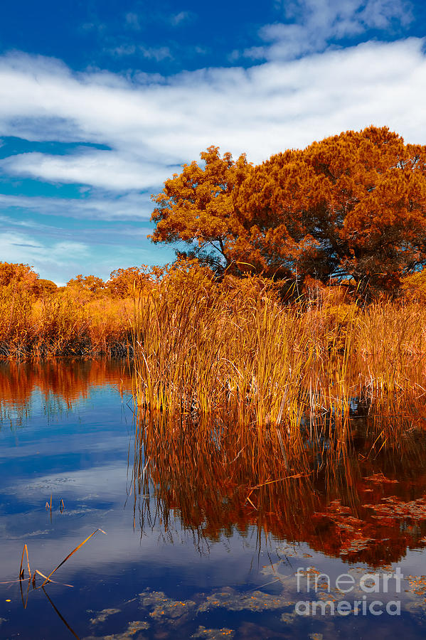 Autumn Photograph - Autumn Landscape by Gabriela Insuratelu