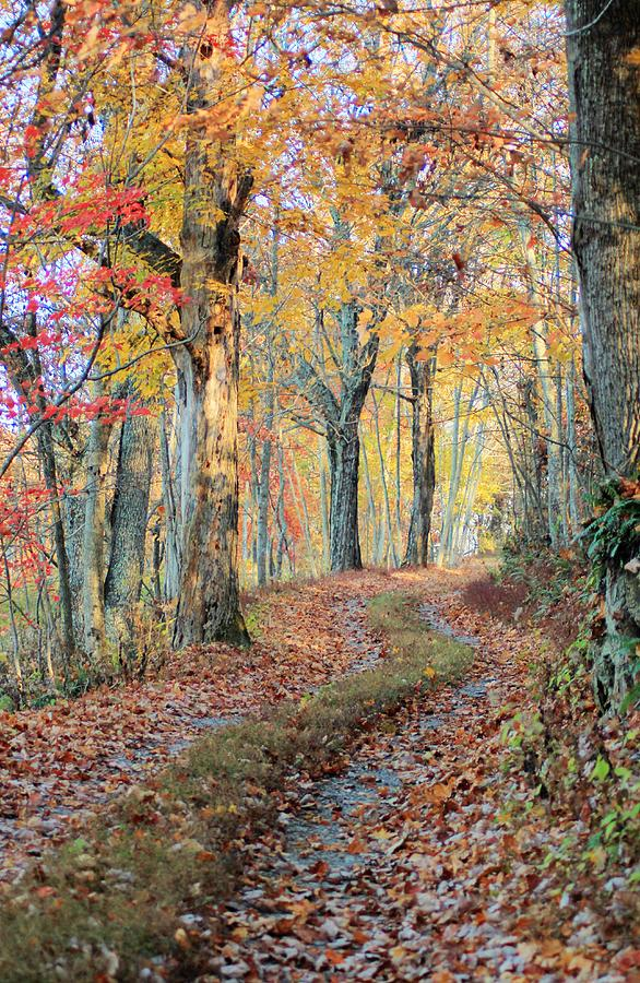 Autumn Photograph - Autumn Lane by Heavens View Photography