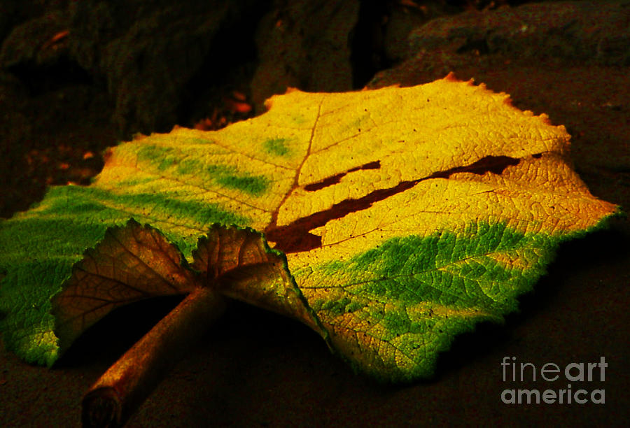 Autumn Leaf Photograph - Autumn Leaf by Daniele Smith