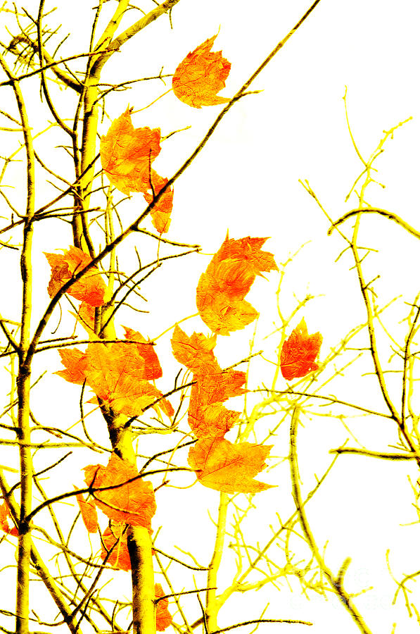 Abstract Photograph - Autumn Leaves Abstract by Andee Design
