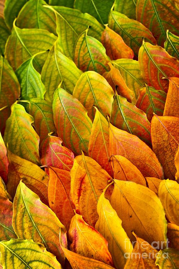 Leaves Photograph - Autumn Leaves Arrangement by Elena Elisseeva