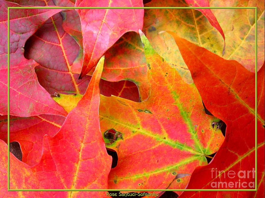Autumn Leaves Closeup Photograph By Rose Santuci Sofranko