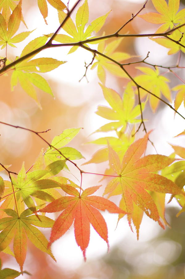 Vertical Photograph - Autumn Leaves by Cocoaloco
