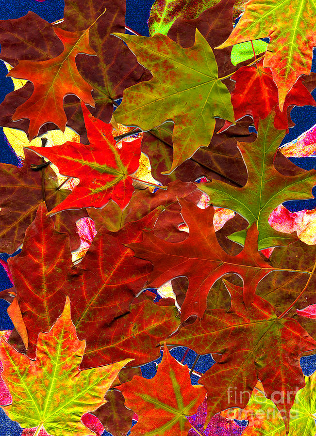 Leaves Photograph - Autumn Leaves Collage by Nancy Mueller