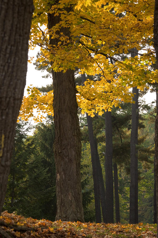Tree Photograph - Autumn Leaves by Darleen Stry