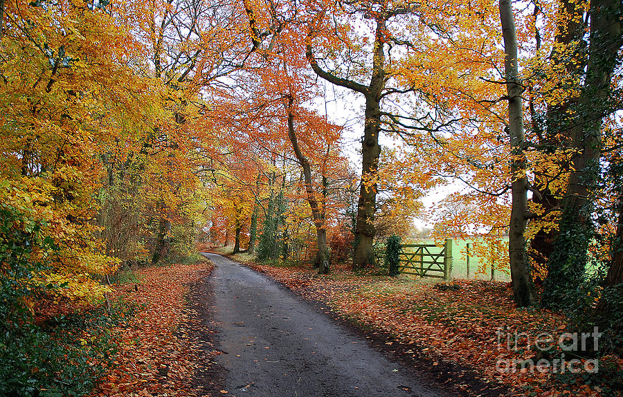 Arley Estate Photograph - Autumn Leaves by Harold Nuttall