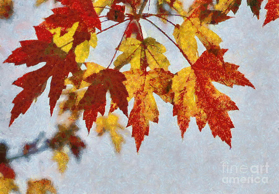 Foilage Photograph - Autumn Leaves IIi by Billie-Jo Miller