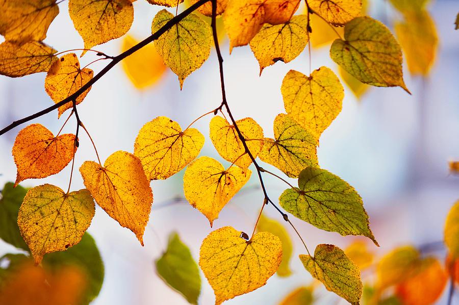 Autumn Photograph - Autumn Leaves by Jenny Rainbow