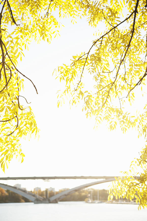 Vertical Photograph - Autumn Leaves On Branch With Bridge In Background, Close-up by Johner Images