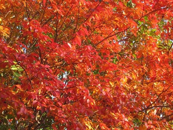 Autumn Leaves Photograph - Autumn Leaves by Shawn Hughes