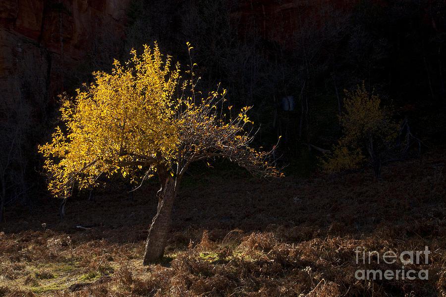 Autumn Photograph - Autumn Light by Mike  Dawson