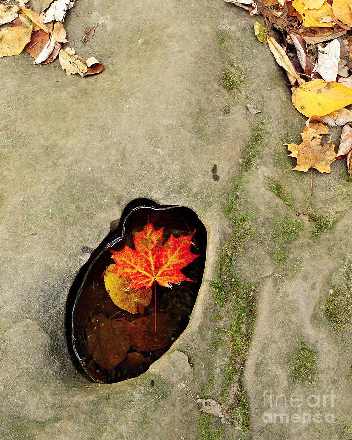 Autumn Photograph - Autumn Maple Leaf by Matt Tilghman