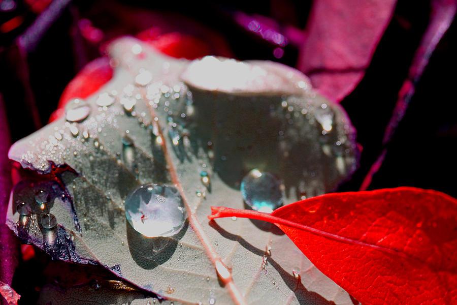 Autumn Photograph - Autumn Menagerie  by Marie Jamieson