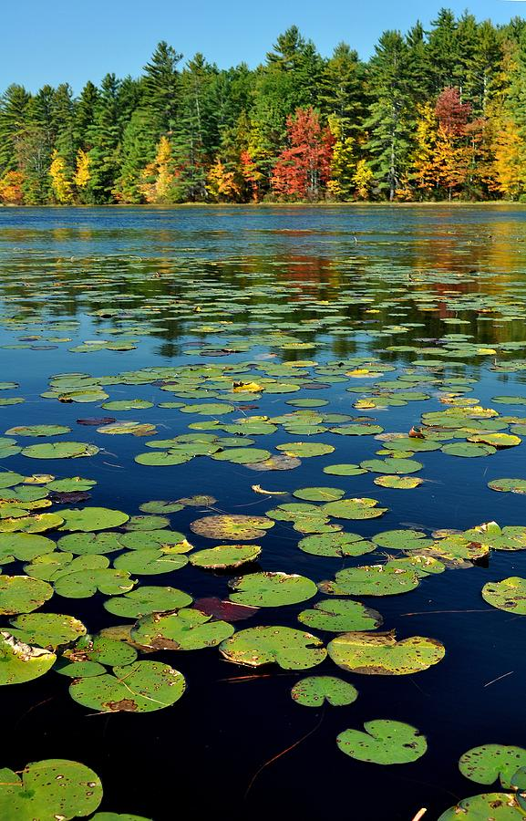 Autumn Photograph - Autumn On The River by Rick Frost