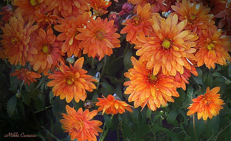 Floral Photograph - Autumn Orange Flowers by Mikki Cucuzzo