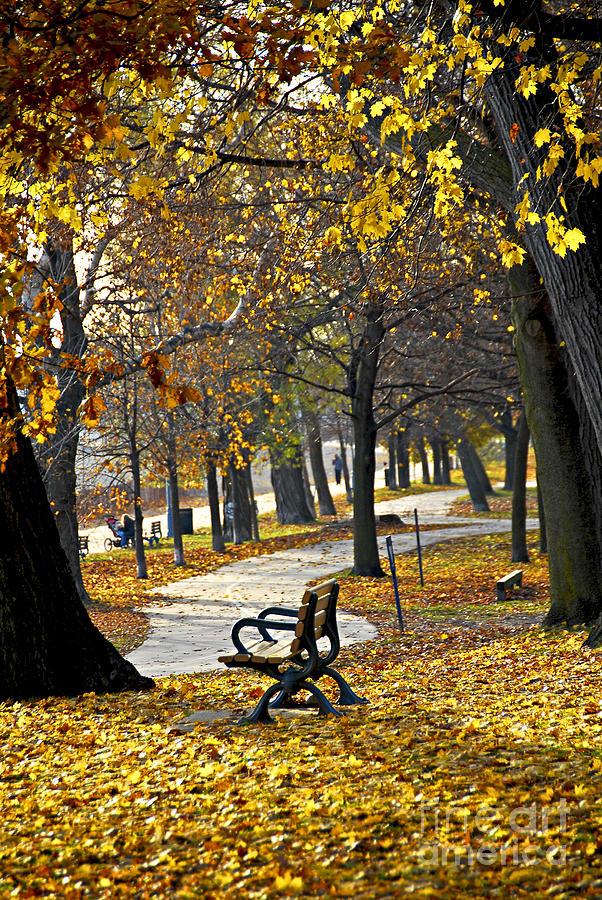 Park Photograph - Autumn Park In Toronto by Elena Elisseeva