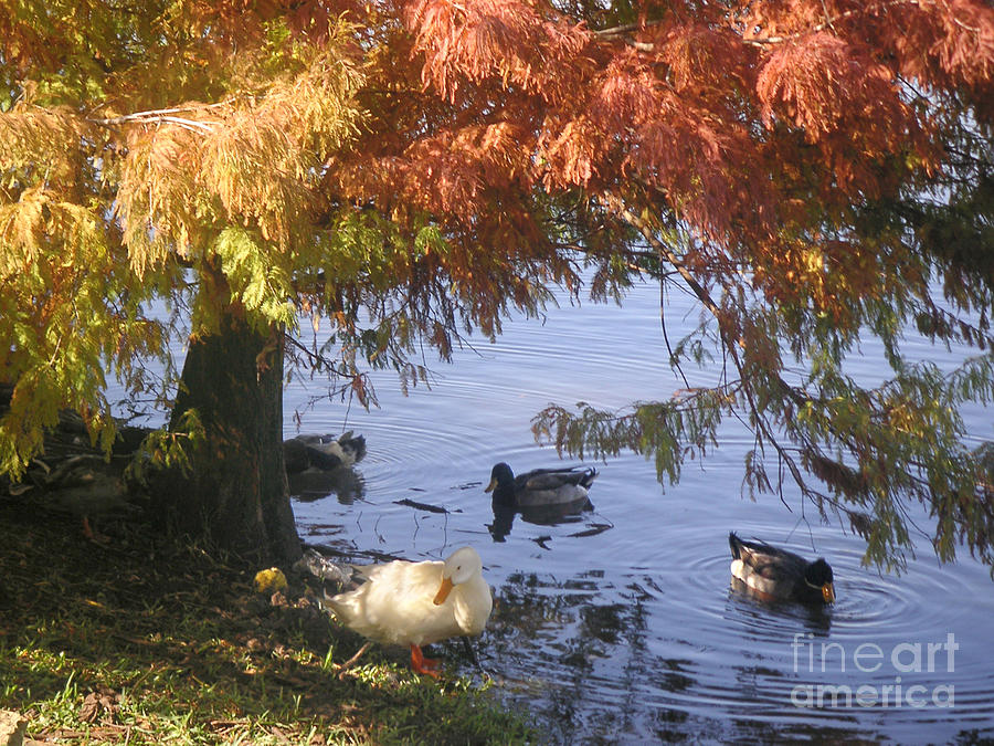 Nature Photograph - Autumn Peace by Lucyna A M Green