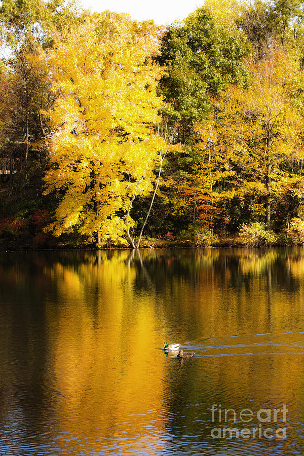 Autumn Photograph - Autumn Pond by Leslie Leda