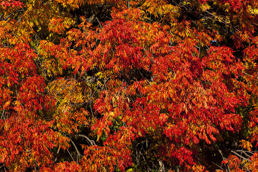 Autumn Photograph - Autumn Red by Garry Gay