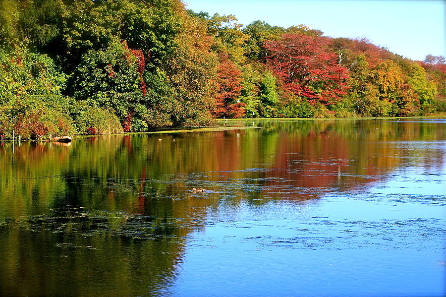 Autumn Photograph - Autumn Reflections by Susan Elise Shiebler