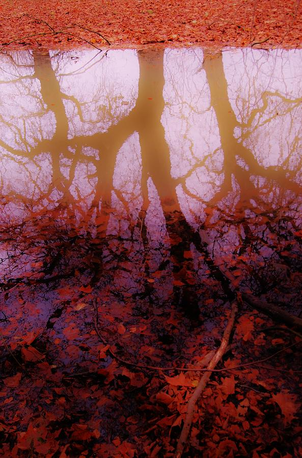 Autumn Photograph - Autumn Reflections  by Xoanxo Cespon